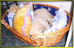 I bet your bed isn's as comfy as this!