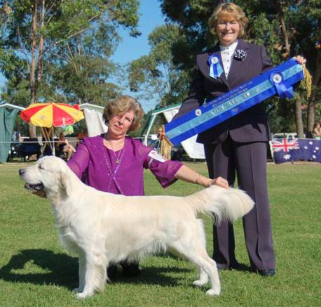 Kyva's son winning Runner Up in Show at the Golden Retriever Club Championship Show 2007