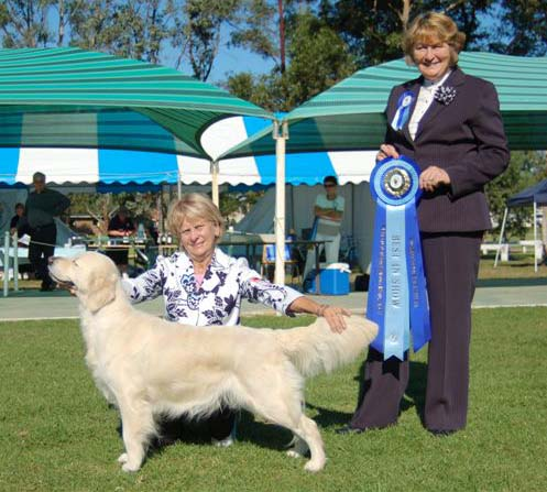 Willy's daughter Ch Goldtreve Wild Chilipepa winning Best in Show at the Golden Retriever Club Championship Show May 2007