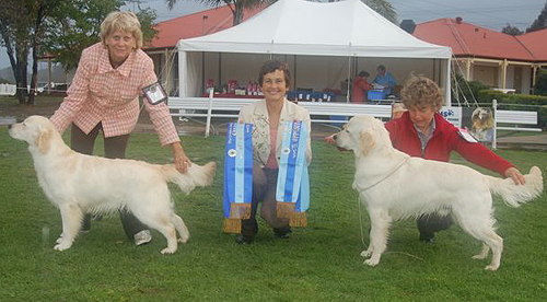 Bella Rose winning Minor Puppy in Show at the GRC Specialty with Anne Nerell, Sweden