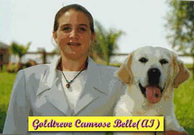 CH GOLDTREVE CAMROSE BELLE (AI)