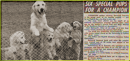 Six Special Pups for a Champion